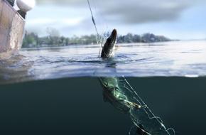Fischen | © Tourismusverband Attersee